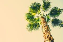 在被定调子的米黄天空背景时髦颜色的棕榈树 文本的超现实主义的葡萄酒样式拷贝空间 热带的叶子 免版税库存照片