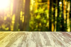 在被弄脏的森林背景的空的土气木台式在summ 图库摄影