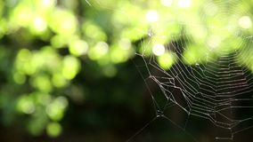在被弄脏的绿色植被背景上的蜘蛛网 股票录像