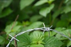 在被弄脏的绿色背景的钢铁丝网 图库摄影