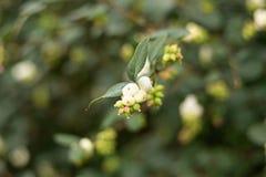 在被弄脏的背景的分支每年落叶的灌木 免版税图库摄影