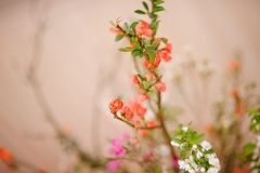 在被弄脏的背景的微小和美丽的花 库存照片