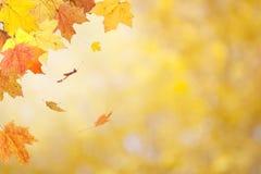 在被弄脏的背景的秋叶 免版税库存照片