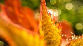 在被弄脏的背景的黄色叶子 特写镜头照片 库存照片