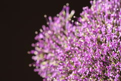 在被弄脏的背景的紫罗兰色花与boke 图库摄影