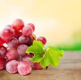 在被弄脏的自然背景的葡萄 库存照片