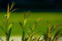 在被弄脏的绿色和深蓝背景的新鲜的树苗 库存照片
