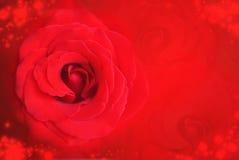 在被弄脏的bokeh背景的红色玫瑰Valentine&的x27; s天和结婚周年 库存照片