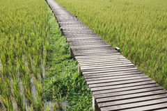 在被归档的米的木桥梁 免版税库存照片