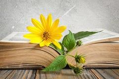 在被打开的旧书的黄色花 免版税库存照片