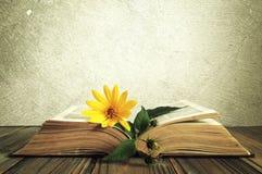 在被打开的旧书的黄色花 免版税库存图片