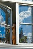 在被打开的窗口的猫小雕象 免版税图库摄影