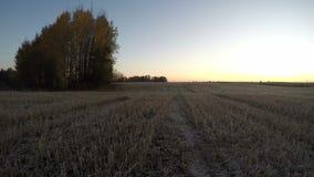 在被收获的领域与白杨木树丛,时间间隔的美好的秋天日出 股票录像