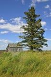 在被放弃的房子前面的孤立树 库存图片