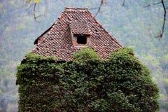在被放弃的房子的长得太大的常春藤 库存图片