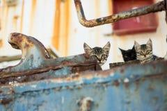 在被放弃的老生锈的船的猫 图库摄影