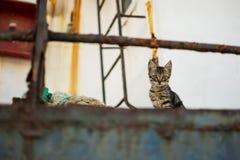 在被放弃的老生锈的船的猫 免版税库存照片