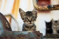 在被放弃的老船的逗人喜爱的虎斑猫 免版税库存图片