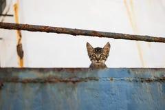 在被放弃的老船的逗人喜爱的虎斑猫 免版税图库摄影