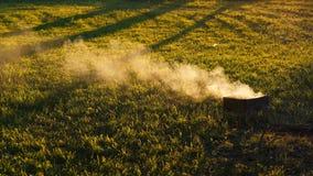在被日光照射了绿色领域的烟卷毛 股票视频