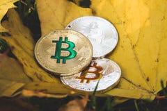 在被染黄的干燥秋天叶子的Bitcoins谎言, redu的概念 免版税库存图片