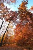 在被查看的结构树之下的秋天 免版税库存照片