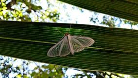 在被栖息的绿色叶子的飞蛾 库存照片