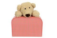 在被检查的熊之上查找手提箱葡萄酒 免版税库存图片
