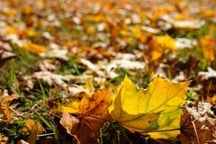 在被点燃的后面的黄色秋天叶子 免版税图库摄影