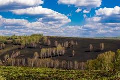 在被烧焦的小山的树 免版税库存图片