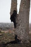 在被烧焦的领域的被烧的树干在有雾的春天早晨 在火以后的死的树 免版税图库摄影