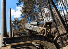 在被烧的杉木森林的采伐的机器 库存图片