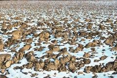 在被犁的土壤的熔化的雪 被犁的领域春天视图  库存图片