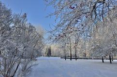 在被盖的城市公园树冰的美好的冬天风景 图库摄影