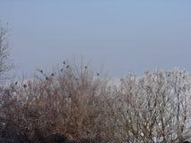 在被盖的树的美丽的景色由雪 免版税库存照片