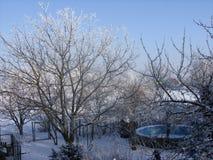 在被盖的树的美丽的景色由雪 免版税图库摄影
