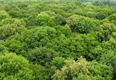 在被看见的森林之上 库存照片