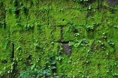 在被破坏的墙壁上的青苔在大桶Phou在占巴塞省 免版税库存照片