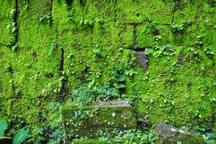 在被破坏的墙壁上的青苔在大桶Phou在占巴塞省 免版税库存图片