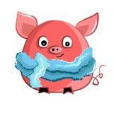 在被编织的围巾的逗人喜爱的猪 皇族释放例证