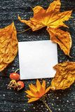 在被编织的棕色纺织品背景的背景的白方块叶子,干燥黄色离开,红色野生玫瑰色莓果,橙色花 免版税库存照片