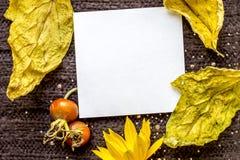 在被编织的棕色纺织品背景的背景的白方块叶子,干燥黄色离开,红色野生玫瑰色莓果,黄色花 免版税库存图片