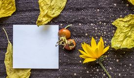 在被编织的棕色纺织品背景的背景的白方块叶子,干燥黄色离开,红色野生玫瑰色莓果 免版税库存照片