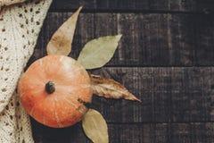 在被编织的毛线衣的美丽的南瓜有在土气woode的叶子的 图库摄影
