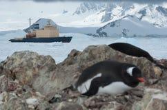 在被计分的冰南极海峡的破冰船航行在p附近 图库摄影
