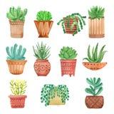 在被设置的罐的水彩室内植物 免版税库存照片