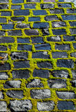 在被铺的路的绿色青苔 免版税库存照片