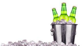 在被隔绝的冰桶的啤酒瓶 库存图片