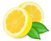 在被隔绝的白色背景的水多的黄色柠檬 库存照片