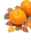 在被隔绝的秋叶的橙色文本的南瓜和空间 免版税图库摄影